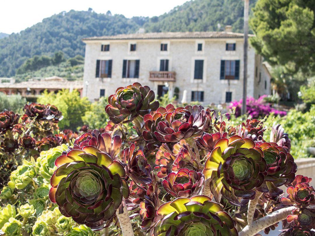 Bilder aus Mallorca. Peter Vogel. Fotograf.